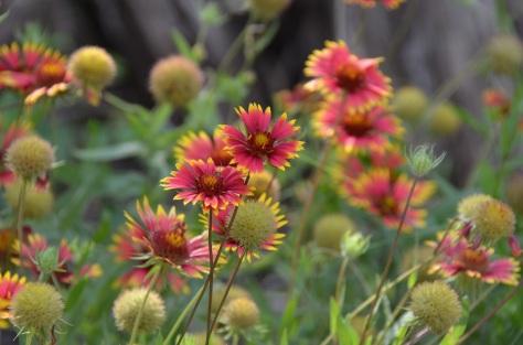 05 Wildflower